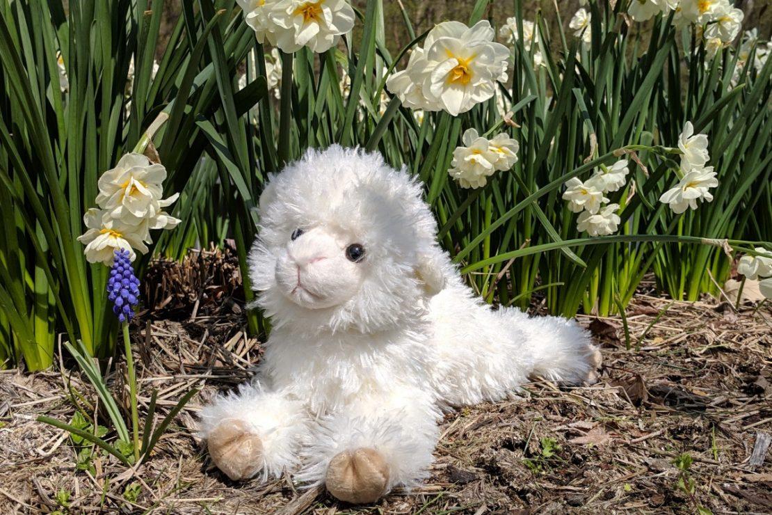 Little Lamb from Douglas
