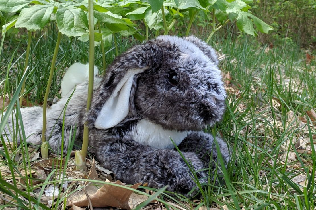 Big Lop-Eared Bunny from Douglas