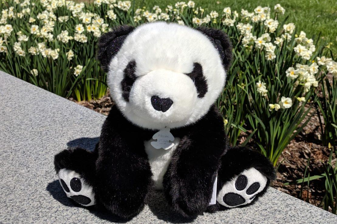 Histoire d'Ours Panda