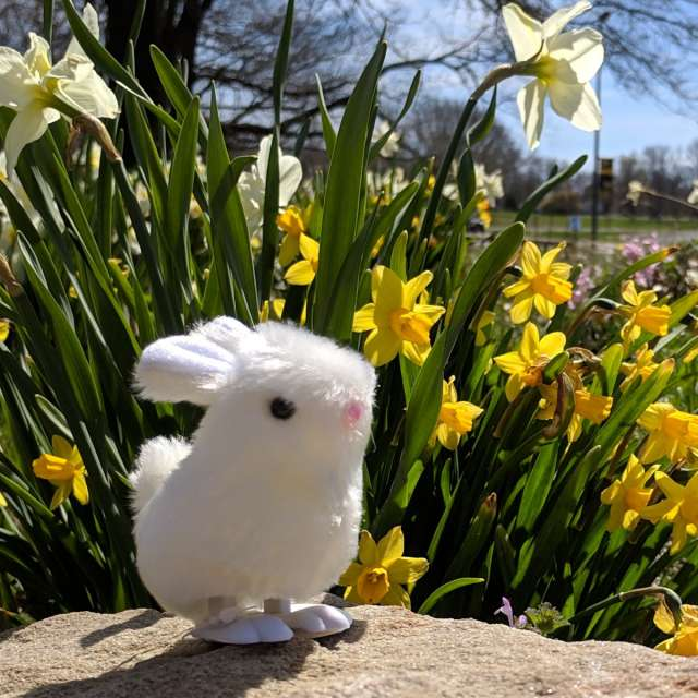 Itty Bitty Bunny Welcomes Spring!