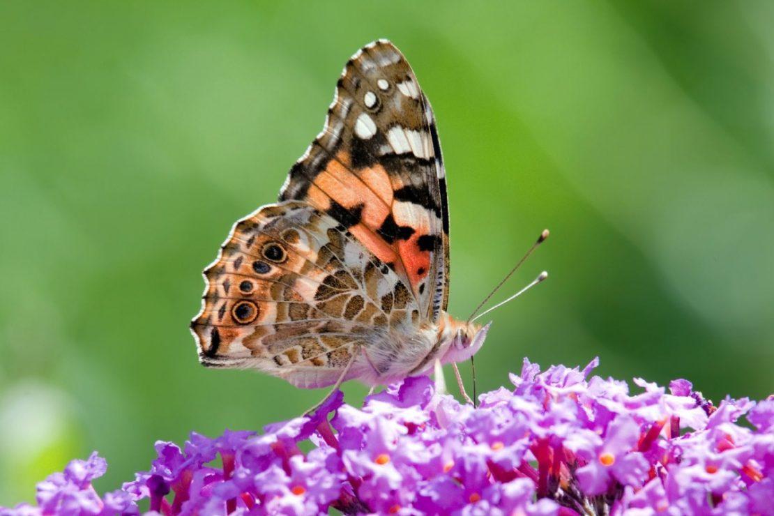03-13-19-butterfly-header-1200x800