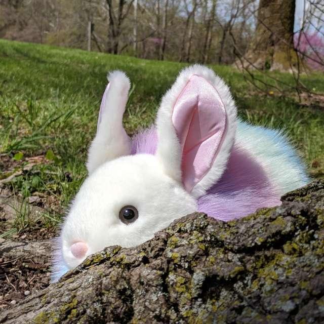 Sneaky little bunny...