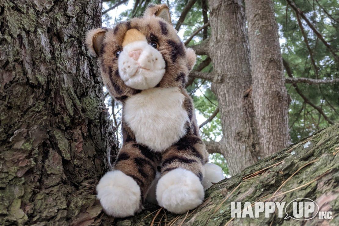 Douglas Plush Kitty climbs a tree