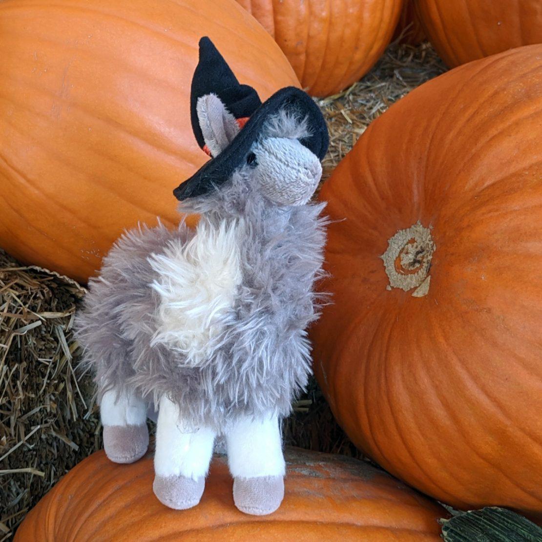 10 23 19 halloween llama sq