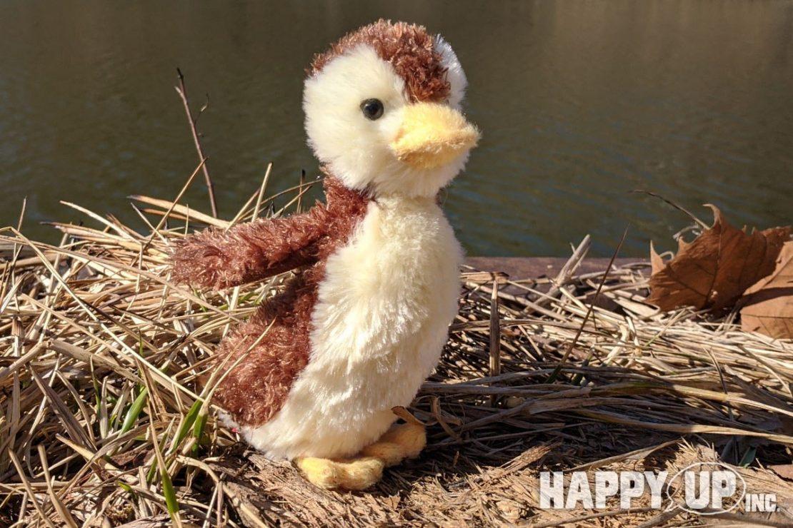 Marsha the Mallard Duckling from Douglas