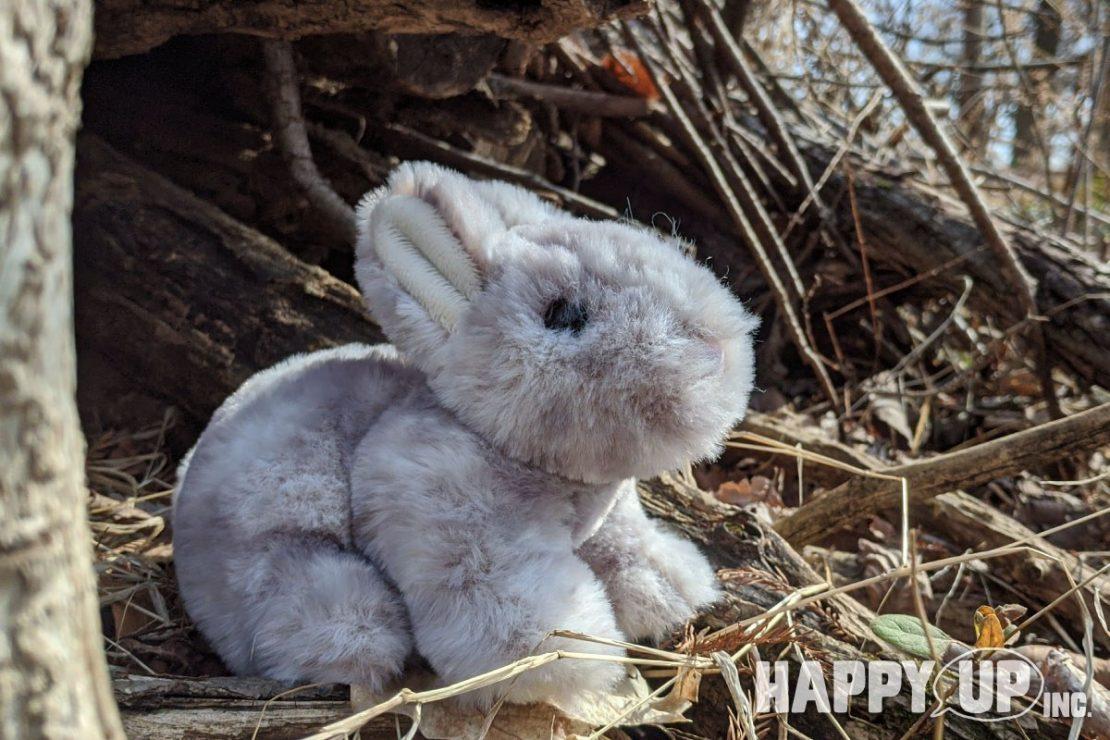 Tyler the Grey Bunny from Douglas