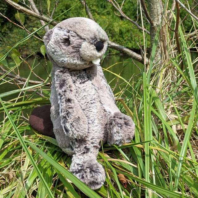 Bashful Beaver from Jellycat