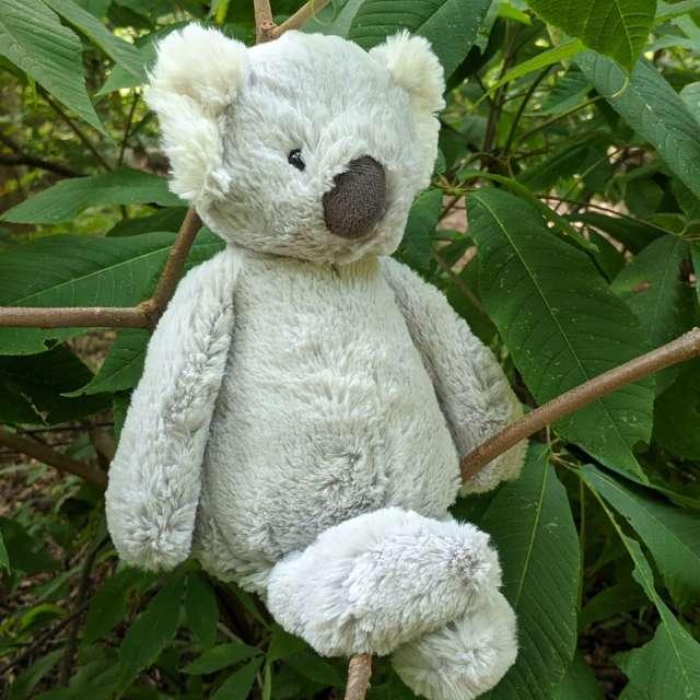 Bashful Koala from Jellycat
