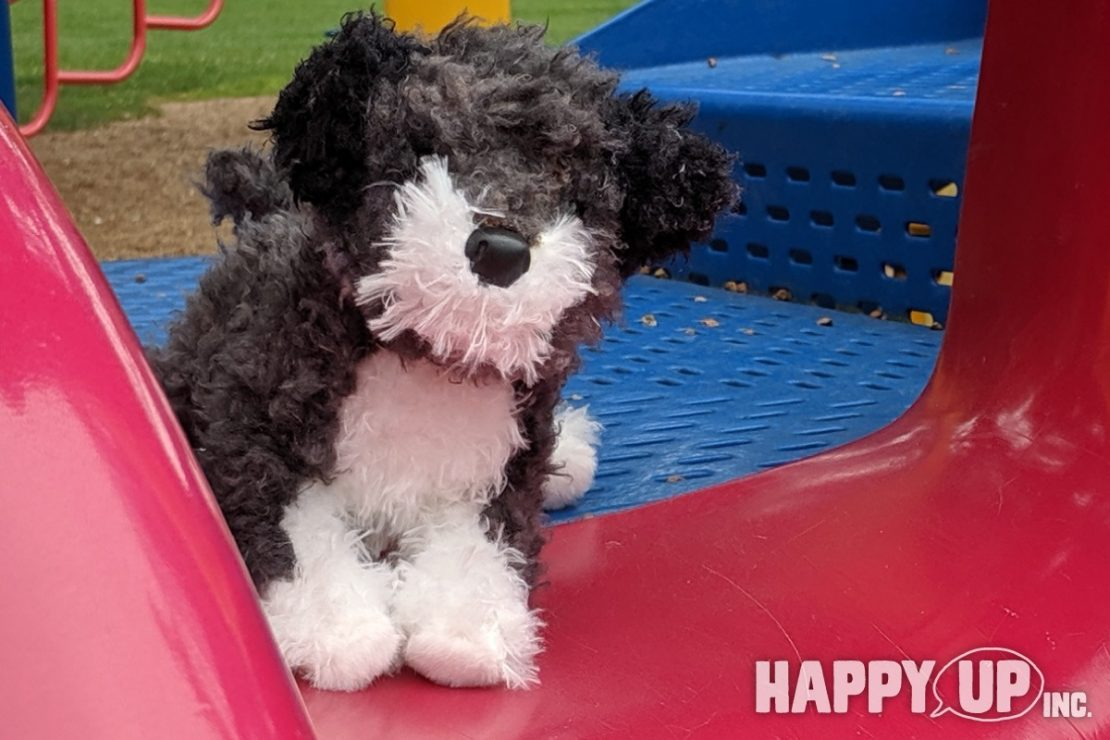 Brody the Schnoodle from Douglas