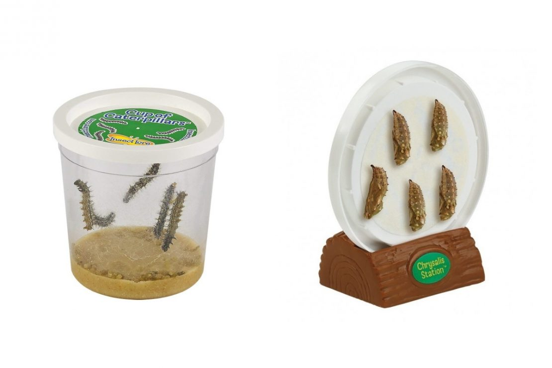 Insect Lore Butterfly Garden Cup of Caterpillars