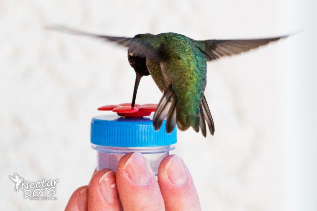 Nectar DOTS Hummingbird Feeders