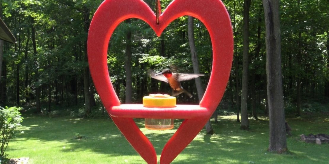 Nectar DOTS Hummingbird Heart Feeder
