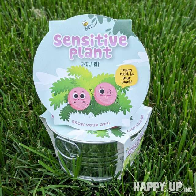 Buzzy Sensitive Plant Grow Kit